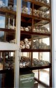 Remains from the Killing Fields