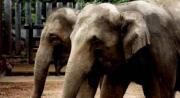 Zoo - Elephants