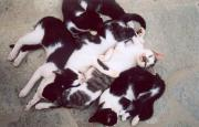 Puddle of kittens