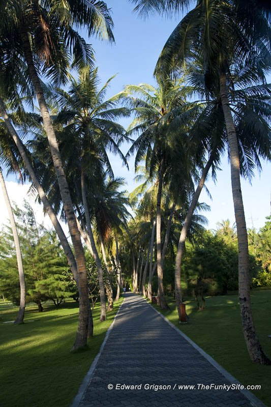 Palm lined avenues