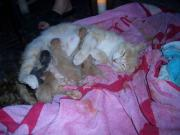 Kittens born at my feet! Now that is dinner entertainment...
