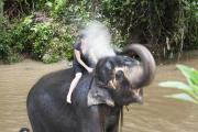 An elephant shower
